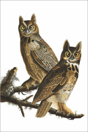 Canvas print  Great Horned Owl from Birds of America - John James Audubon