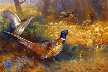 Premium poster  Two pheasants on the edge of the forest - Archibald Thorburn