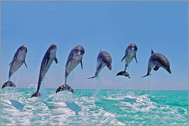 Gérard Lacz - 6 dolphins jump out of the water