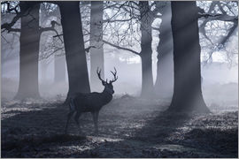 Alex Saberi - A male red deer stag waits in the early morning mists of Richmond park, London.