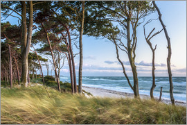 newfrontiers photography - Coastal Forest and Beach at the Baltic Sea