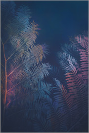 Pascal Deckarm - Abstract Fern