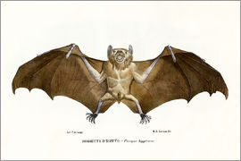 Raimundo Petraroja - Egyptian Fruit Bat