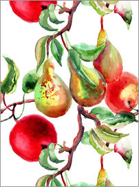 Apples and pears watercolor
