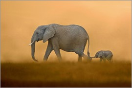 FLPA - African Elephants mother with baby, Masai Mara