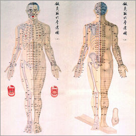 Acupuncture Map of the male body