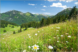bildpics - alpine meadow germany