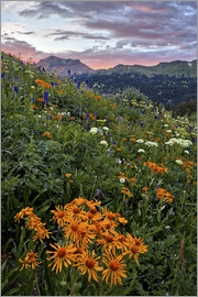 James Hager - Alpine meadow with orange sneezeweed