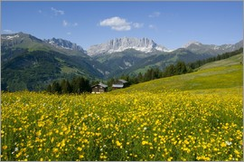 Juerg Alean - Alpine meadow, Switzerland