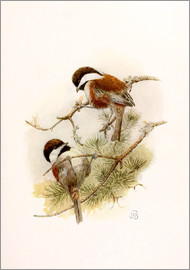 Allan Brooks - Chickadees