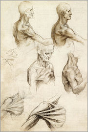Leonardo da Vinci - Anatomy of the Shoulder