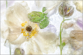 Mandy Disher - Anemone ice