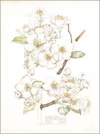 Charles Rennie Mackintosh - apple blossom