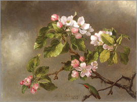 Martin Johnson Heade - Apple Blossoms and a Hummingbird