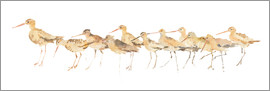 Avery Tillmon - Watercolor Sandpipers Panel