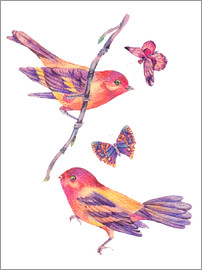Watercolor birds and butterflies