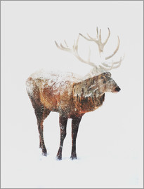 Andreas Lie - Arctic Deer
