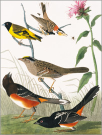 John James Audubon - Audubon: Various Birds.