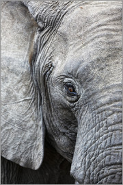 Ashley Morgan - Eye of the African elephant