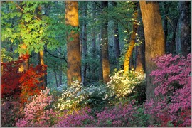 Nancy Rotenberg - Azalea forest