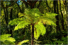 Michael Rucker - Tree fern (Cyatheales) in Milford Sound New Zealand