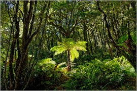Michael Rucker - Tree fern in the rainforest New Zealand