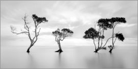 Steven Fudge - Tree silhouettes winding over a lake