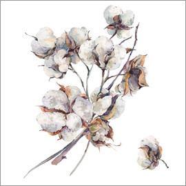 Cotton flower twigs