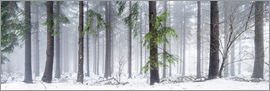 Jan Christopher Becke - Bavarian Forest as panorama in winter