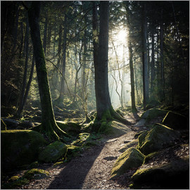 Richard Grando - Bavarian forest - Sausbach