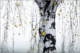 Mareike Böhmer Photography - Birch Tree 1