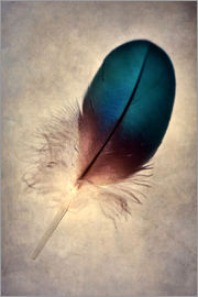 Jaroslaw Blaminsky - Blue parrot feather