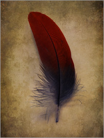 Jaroslaw Blaminsky - Blue and red feather