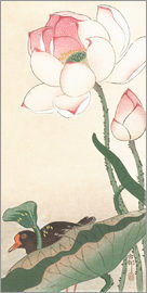 Ohara Koson - Blue tit on a branch
