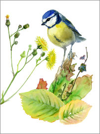 Verbrugge Watercolor - Blue Tit Bird and Sowthistle
