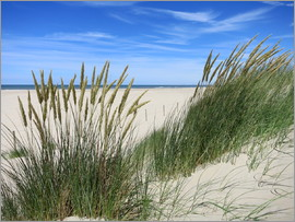 Susanne Herppich - thriving beach grass in the dunes