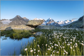 Roberto Sysa Moiola - Blooming of cotton grass at feet of Piz Bernina, Switzerland
