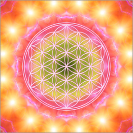 Dolphins DreamDesign - Flower of Life - Heart Energy