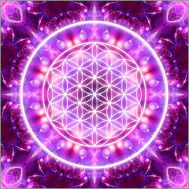 Dolphins DreamDesign - Flower of Life - Transformation