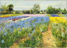 Timothy Easton - Flower field