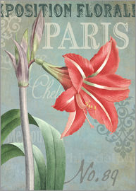 Gail Fraser - Flower Show Paris