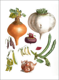 E. Champin and Mlle. Coutance - beans peas, turnips, swede, beetroot and onions