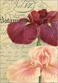 Gail Fraser - Botanist Repository lilies