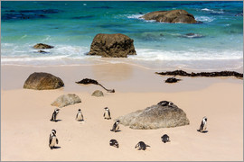 Catharina Lux - Boulders Reserve, Penguin Colony