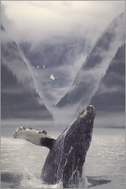Ron Sanford - Humpback whale during emerge