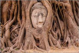 Hessbeck Photography - Buddha head sculpture Ayutthaya Thailand