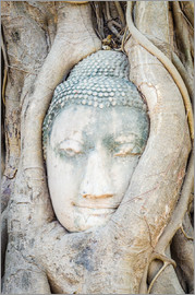 Buddha head behind tree trunk in Ayutthaya, Thailand