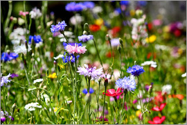 Filtergrafia - colorful flower meadow