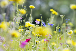 Lichtspielart - Summer Meadow with blooming wild Flowers