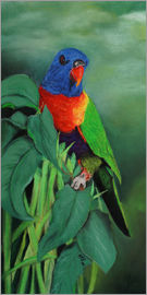 Monica Schwarz - colorful Rainbow lorikeet
